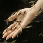 Как справиться с аллергией на аквариумных рыбок