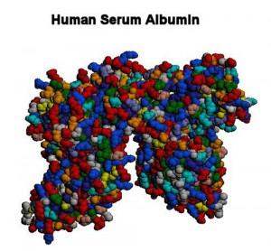 альбумин и глобулин