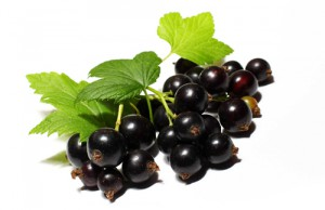 Плоды чёрной смородины
