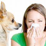 Как возникает и какие особенности имеет аллергия на животных?